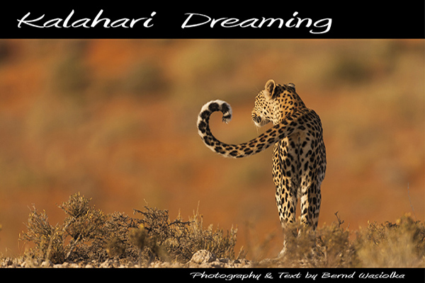 Book Kalahari Dreaming Wildlife Photography