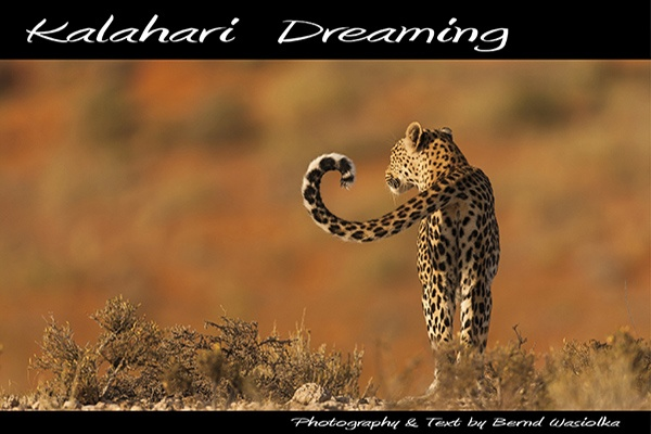 book_kalahari_dreaming_wildlife_photography