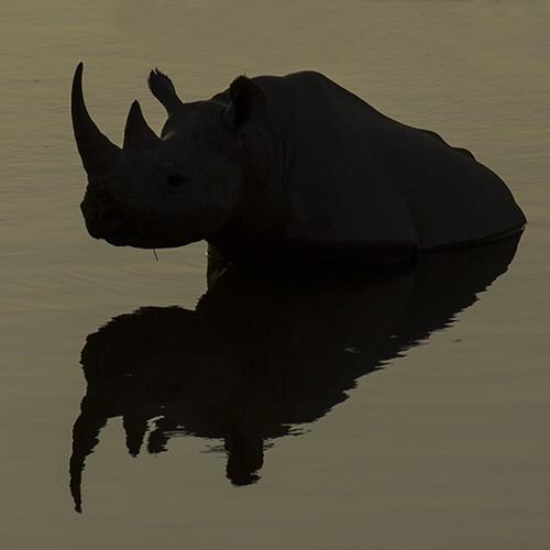 Mirror-Rhino-cBernd-Wasiolka
