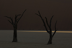 Dead Vlei Shadow Tree
