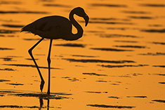 Flamingo Sunset Namiba