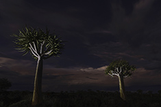 Quiver tree night