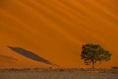 Sossusvlei Tree Shadow
